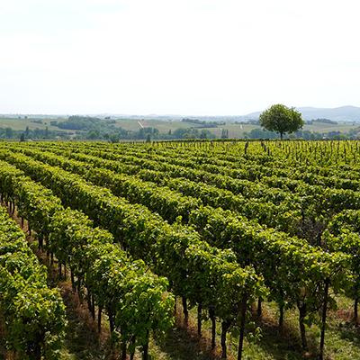 Weinwanderung Rothenburg ob der Tauber